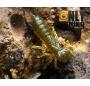 """Силиконовая приманка FishUP Dragonfly 1.5"""""""